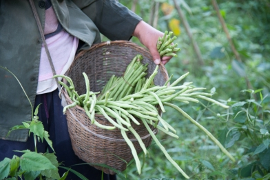 Long green beans